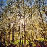 Light shining through the forest  Royalty Free Stock Images