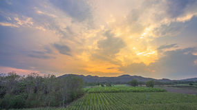 Light through sky above corn fields Royalty Free Stock Photo