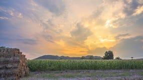 Light through sky above corn fields Royalty Free Stock Image