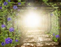 Light in sky . Way to GoCosmic healing energy . Religion background . Ramadan background . Paradise heaven . Light in sky .Way to GoCosmic healing energy Stock Photography