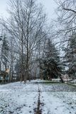 Light snow in Redmond WA with a single line drawn in the snow in the middle of a path between very tall bare trees. Light snow in Redmond WA with a line drawn in stock image