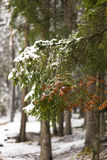 Light snowfall and snowy branches. In a forest stock images