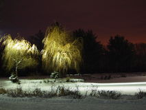 Light on snowy tree at night Stock Photos
