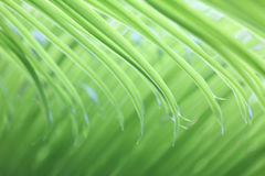 Light soft green palm leaf background Royalty Free Stock Photography