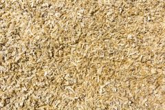 Light soft yellow brown natural bark wooden chips, recycled material surface. Wallpaper, design and background. royalty free stock images