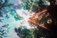 Light spectrum through pine trees. Sun rays lens flare light spectrum through pine trees. Abstract spring nature colorful motion blur stock images