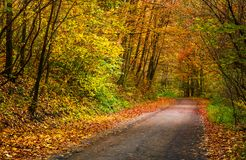 Light spot on the road turnaround in autumn forest. Beautiful nature scenery with lots of colorful foliage on hillside Royalty Free Stock Photos