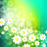 Spring background with chamomiles Stock Photography