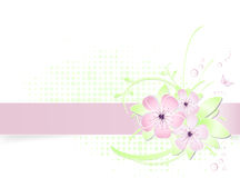 Light spring flower background with banner Royalty Free Stock Images