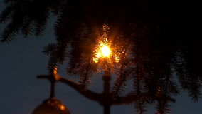 Light through the spruce branches stock video footage