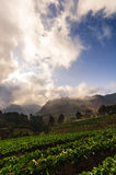 Light on strawberry farm in angkhang mountain. Ang Khang popular attractions during the winter that strawberry farm is popular tourist destination Stock Images