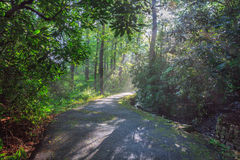 Light Streaming onto Path in Woods Stock Photos