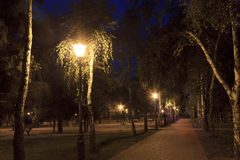 Light streetlights through the leaves of birch trees in the park Stock Image