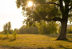 The light of the sun through the branches Royalty Free Stock Image