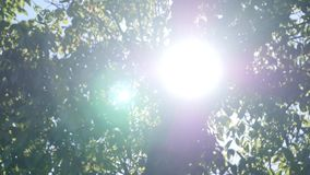 The light of the sun breaks through the branches.  stock video footage