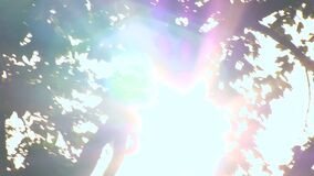 The light of the sun gets into the camera it shines Among the branches of tree crowns stock footage