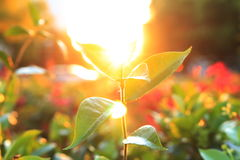 Light of sun. Photo of plant at sunset, get feeling of warmth and hopeful heart. Photo is taken at downtown Sacramento, California stock photography