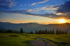 Light of the sunset over the meadow Royalty Free Stock Photo