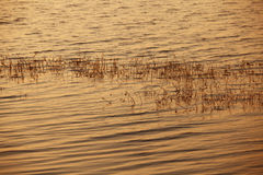 The light of the sunset reflected on lake water. Namibia Royalty Free Stock Photo