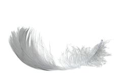 Light swan feather Stock Image