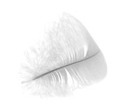 Light swan feather on white Stock Images