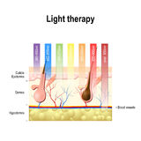 light therapy, Phototherapy or laser therapy. Depth of penetration by wave light royalty free illustration