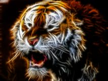 Light Tiger Royalty Free Stock Photography