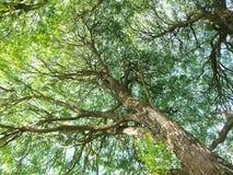 Light tree Stock Photo