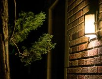 Light and Tree on Brick Wall stock image