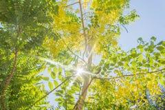 Light through tree Royalty Free Stock Image