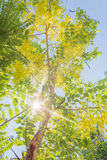 Light through tree Royalty Free Stock Photo