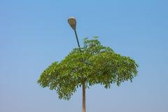 Light Tree Stock Image