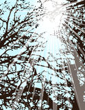 Light through Trees Royalty Free Stock Image