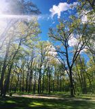 Light and trees. Beautiful nature in town near Kiev in Ukraine Royalty Free Stock Photography