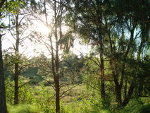 Light trees in the park. Image of a walk in the ecological reserve stock images