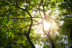 Light through trees. Royalty Free Stock Photos