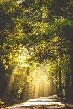 Light through the trees. Sunrays on a road in Alabama Royalty Free Stock Photography
