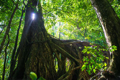 Light through the trunk of a tree Royalty Free Stock Photos