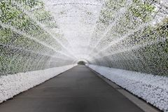 Light tunnel at Nabana no sato winter illumination, Japan. Light tunnel at Nabana no sato winter illumination. Nabana no sato is a famous flower garden locate stock photo
