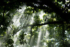 Light under the trees. Mistery light under the trees Royalty Free Stock Image