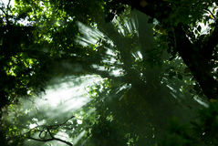 Light under the trees Stock Photography