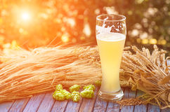 Light unfiltered beer, hops, malt, background Stock Photo