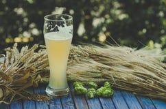 Light unfiltered beer, hops, malt, background Stock Image