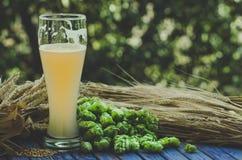 Light unfiltered beer, hops, malt, background Royalty Free Stock Images