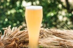 Light unfiltered beer, malt, background Royalty Free Stock Image