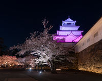 Light up of cherry blossoms tree in Tsuruga Castle Aizu castle Stock Photo