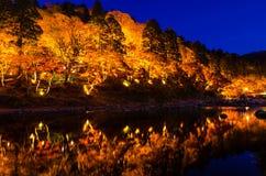 Light-up of Colorful Autumn Leaf Season Royalty Free Stock Image