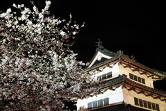 Light up of Hirosaki castle and cherry blossoms Stock Images