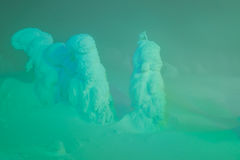 Light up of Snow monsters at Zao Mountain , Japan. . Royalty Free Stock Photos