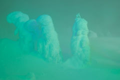 Light up of Snow monsters at Zao Mountain , Japan. . Stock Photo